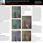 Filipin Staining: Detecting Neuropathic Pain in a Cell
