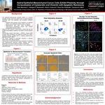 Hybrid Epithelial-Mesenchymal Cancer Cells Exhibit Plasticity through Co-localization of Cytokeratin and Vimentin with Apoptotic Resistance by Silmi Merchant, Abhijeet P. Deshmukh, Nick A. Kuburich, Petra Den Hollander, and Sendurai A. Mani