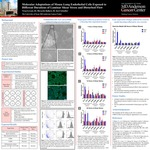 Molecular Adaptations of Mouse Lung Endothelial Cells Exposed to Different Durations of Laminar Shear Stress and Disturbed Flow by Viraj Nitin Govani, Riccardo Ballarò, and Keri Schadler
