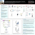 Evaluating microRNA Binding Using Luciferase Constructs